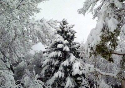 PP Winter