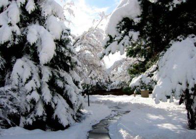 PP Winter Wonderland